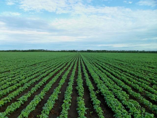 Histórica producción de soja en zafra 2016