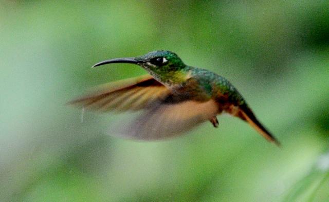 Costa Rica explotará avistamiento de aves para atraer turistas