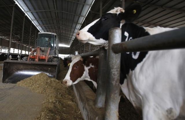 Uruguay puede demostrar que no triangula lácteos