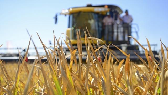 Prevén una caída de 8,9% en su cosecha 2018 al estimar 220,2 millones de toneladas de granos