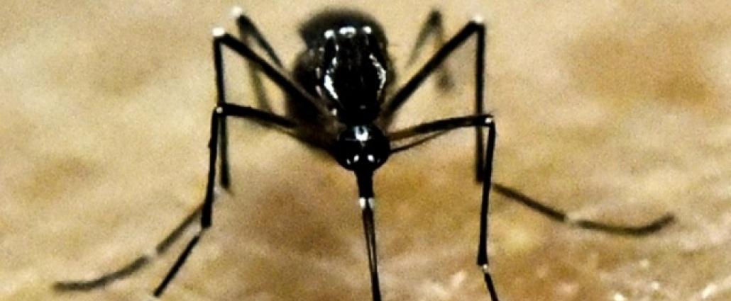 Confirmaron caso de dengue importado en Maldonado