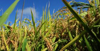 Brasil recogerá cosecha histórica en 2020 tras la producción récord de 2019
