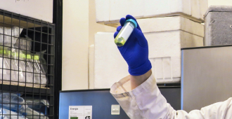 Una investigación argentina permite detectar el dengue en diez minutos