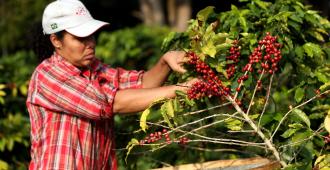 Las exportaciones de café de Brasil crecen un 2,5 % en abril pese COVID-19