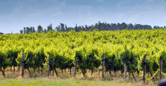 Industria vinícola chilena estima caída de 20 % en exportaciones por pandemia