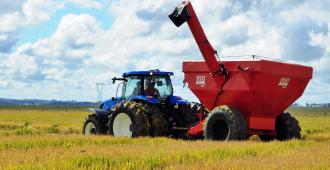 Brasil puede convertirse en exportador de trigo con cultivos en área tropical