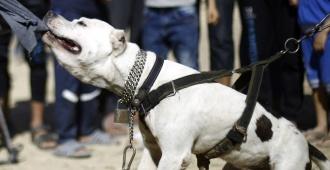 "Diputada colorada busca prohibir razas de perros ""potencialmente peligrosas"""