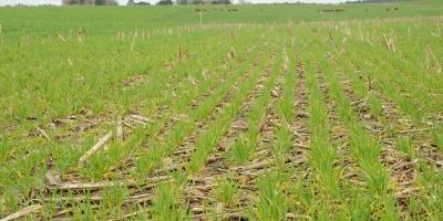 Normativa que mejora producción de soja permitirá el acceso a otros mercados
