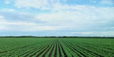 Aplican mayores controles para exportar soja a China