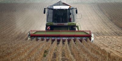 Exportarán 120.000 toneladas de soja para China y Europa