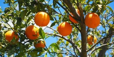 Trabajadores de citricola salteña alcanzaron acuerdo
