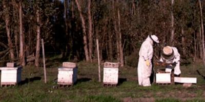 Acuerdo habilitará ingreso de apicultores a colmenas en montes de UPM