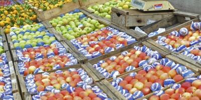 Fracasa la cosecha de duraznos; productores pierden 5 millones de dolares