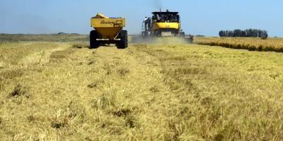 Falta de lluvia está afectando al ganado y producción de soja