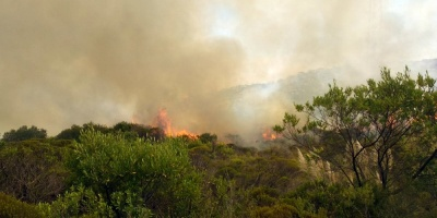 Bomberos dieron por extinguido incendio forestal en Lavalleja