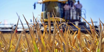 """Argentina sigue """"con atención"""" cupo de trigo concedido por Brasil a EEUU"""