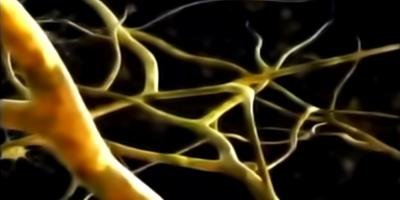 Demuestran que el cerebro humano genera nuevas neuronas hasta los 90 años