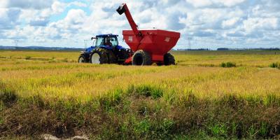 La erosión del suelo puede reducir el rendimiento de los cultivos a la mitad