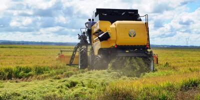 Federación Rural advierte por pérdida de competitividad que afecta el sector
