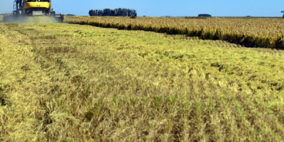 Un 76% del territorio de Chile está afectado por la sequía, según Greenpeace