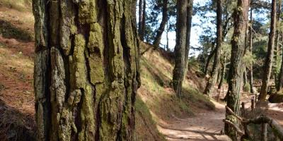 UE recuerda ante deforestación que acuerdo con Mercosur aún no está en vigor