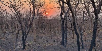 """Bolsonaro reitera que ONG son """"mayores sospechosas"""" por incendios en Amazonía"""