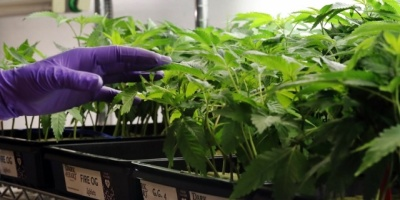 Murro se reunió con la Cámara de Empresas de Cannabis