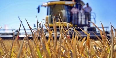 Preocupación en cultivadores de arroz por falta de respuesta del Gobierno