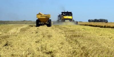 Los agricultores argentinos adelantan sus ventas de maíz y soja