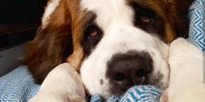 """Las personas pueden sufrir alteraciones si tratan a las mascotas """"como hijos"""""""
