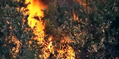 Sigue sin control el incendio en Rocha; Ya consumió 150 hectáreas