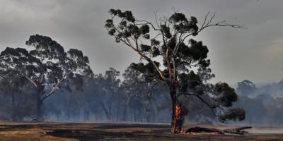 Lograron controlar el incendio forestal que afectó a un área de monte  en Punta del Diablo, Rocha