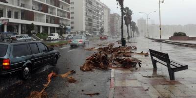 Unos 20 árboles caídos en Montevideo tras el temporal de las últimas horas