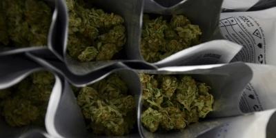 Paraguay tilda de histórico la concesión de licencias para cannabis medicinal