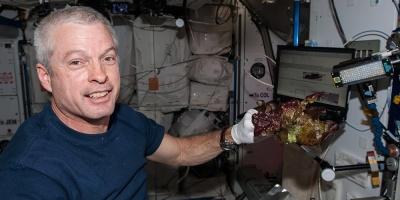 La NASA cultiva en el espacio lechugas sin microbios y seguras para consumo