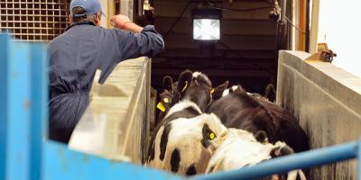 Concretan la venta de 7.000 cabezas de ganado en pie a China