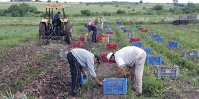 Hoy se celebra el Día del Trabajador Rural