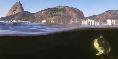 Cuarentena por coronavirus descontamina las aguas de icónica bahía en Brasil