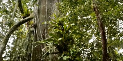 Expertos piden más coordinación para proteger la biodiversidad de la Amazonia