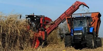 Hay preocupación en Artigas porque 90 trabajadores de la zafra de caña de azúcar no fueron convocados aún por ALUR