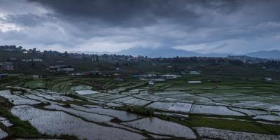 Una plaga de langostas entra en Nepal, una nueva amenaza en plena pandemia