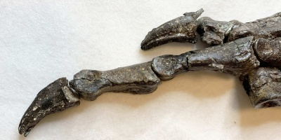 Descubren en Brasil fósil de una especie de dinosaurio desconocida