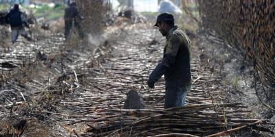 Denuncian al capataz de una plantación de caña de azúcar en Bella Unión por golpear con un rebenque a un trabajador