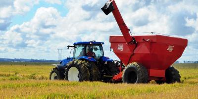 China afrontará problemas de suministro de cereales en 2025, según estudio