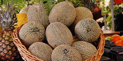 Estado brasileño de Ceará aumenta exportaciones de melón en primer semestre