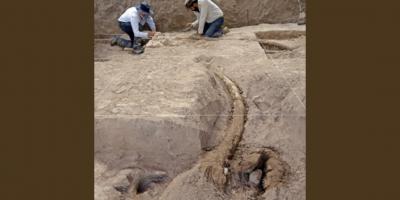 Mastodontes americanos migraron al norte en respuesta al calentamiento global