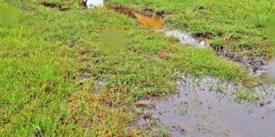 IICA destaca desafíos en tecnología y calidad del suelo en sector agrícola
