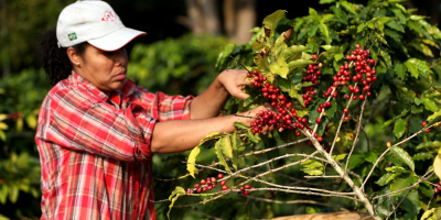 Brasil exportó en setiembre volumen récord de 3,79 millones de sacas de café