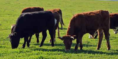 El INAC financia pruebas de ADN de carne incautada por abigeato o faena clandestina