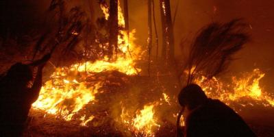 Cambio global obliga a nueva gestión del fuego para proteger la biodiversidad